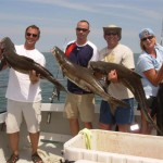 COBIA: Cobia are well known for their great fight and are also great to eat. Cobia will arive in the Lower Chesapeake Bay in mid-May and will stay in the Chesapeake Bay untll late September. We will be sight casting, trolling and also live and dead baitting for these Cobia.
