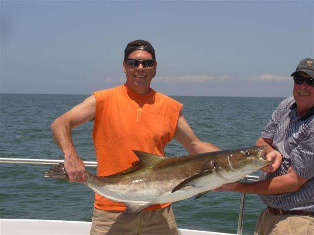 Chesapeake bay charter fishing captain hogg 39 s charter for Fishing chesapeake bay