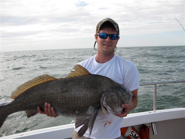 Giant black drum captain hogg 39 s charter service for Black drum fishing