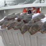 flounder-fishing-virginia-fob-small