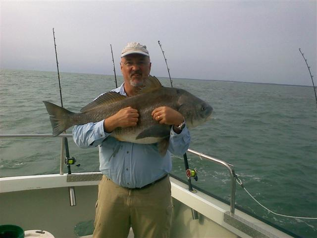 Black drum are here and bigger than ever captain hogg for Black drum fishing
