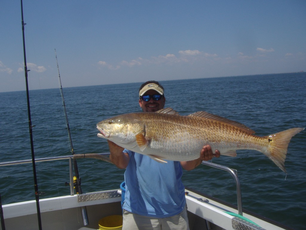 A limit of big spadefish and 14 citation red drum for Red drum fishing