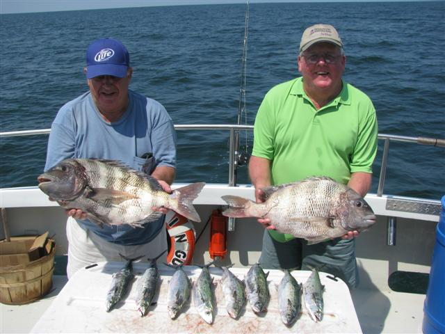 Citation sheepshead and nice black drum and big smiles for Fishing in williamsburg va