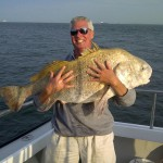BLACK DRUM: Black Drum are one of the largest fish in the Chesapeake Bay. Black Drum can tip the scales at well over 100 pounds. Black Drum are vailable in the Lower Chesapeake Bay fom May to June and the best time to come is the month of May.