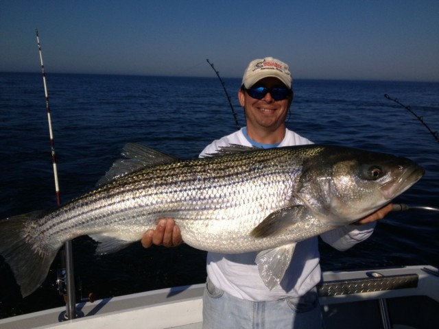 More modest striped drum fish with