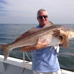 RED DRUM: (Channel Bass) Red Drum is one of the most noble fish in the Chesapeake Bay. Available in the Lower Chesapeake Bay from May to September, Red Drum put up a great fight. We will be trolling, livebaitting and dead baitting for these big Red Drum.