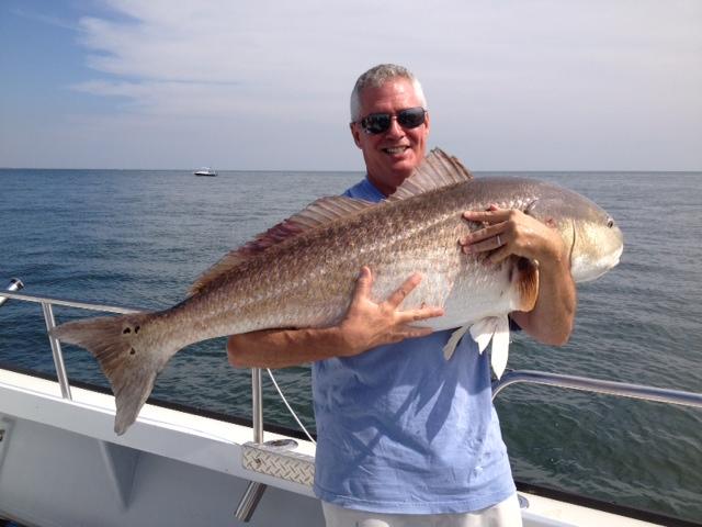 Striped drum fish