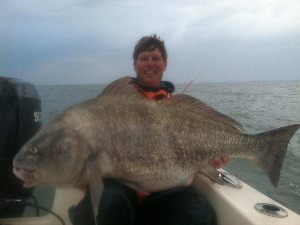 Excellent drum fishing captain hogg 39 s charter service for Saltwater drum fish