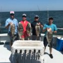 Great Black Drum Fishing in the Chesapeake Bay