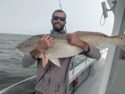Virginia charter fishing for Giant Red Drum