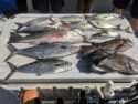 Virginia charter fishing