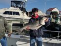 Striped bass are getting bigger