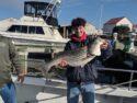Striped bass are getting bigger