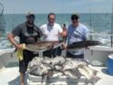 Cobia and spadefish